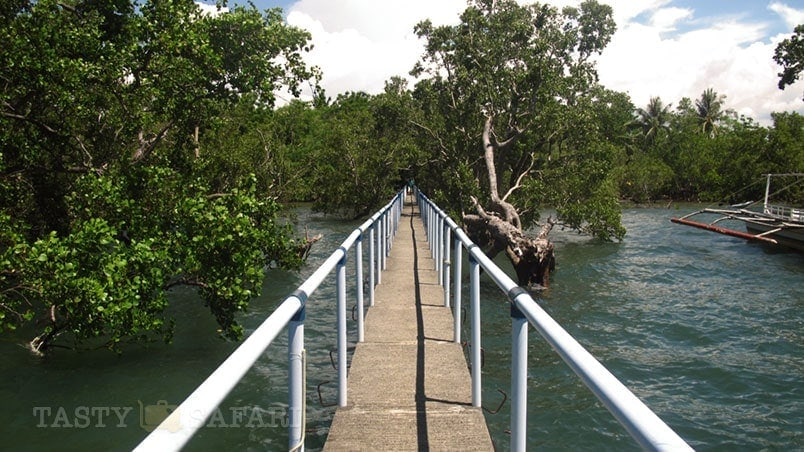 Bridge to the wharf in a mangrove in Cadiz, Negros Occidental