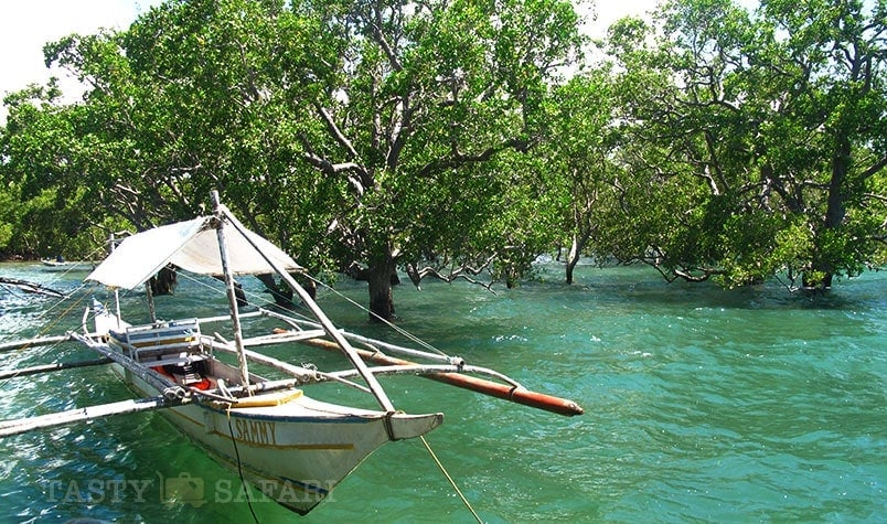 A mangrove in Cadiz, Negros Occidental