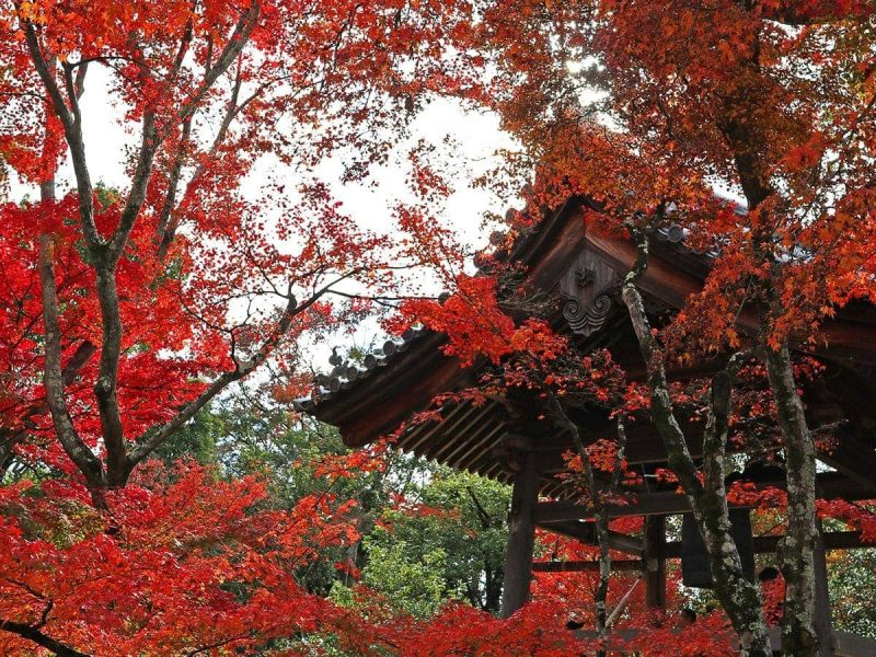 Japan in the fall