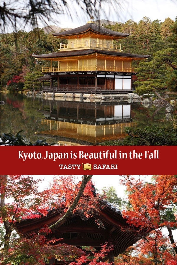 Kyoto, Japan is beautiful in the fall