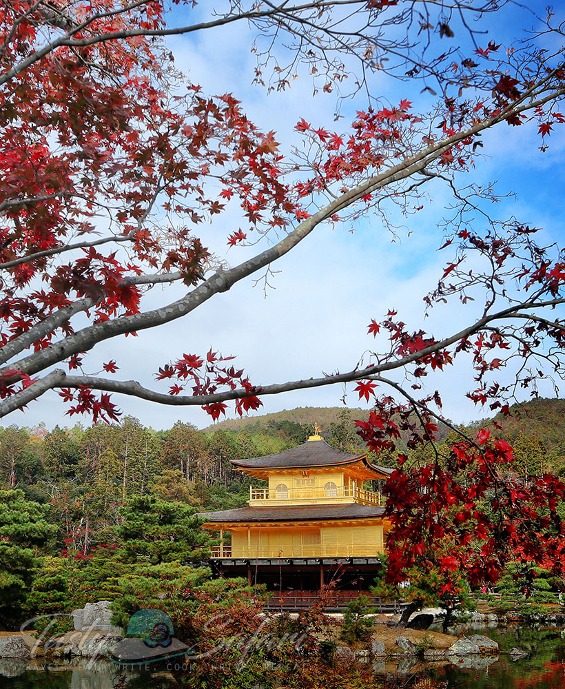 Kinkaku-ji (Golden Pavilion) and autumn leaves