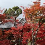 Koyo (crimson leaves) in Kyoto. November 27, 2018.