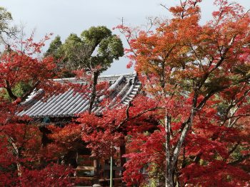 Koyo (crimson leaves) in Kyoto. November 27, 2018.