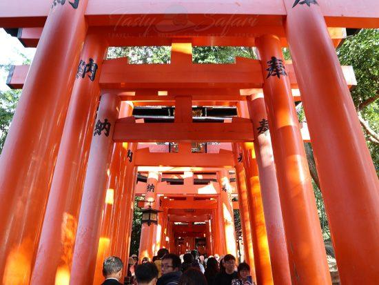 Fushimi Inari Torii Gates