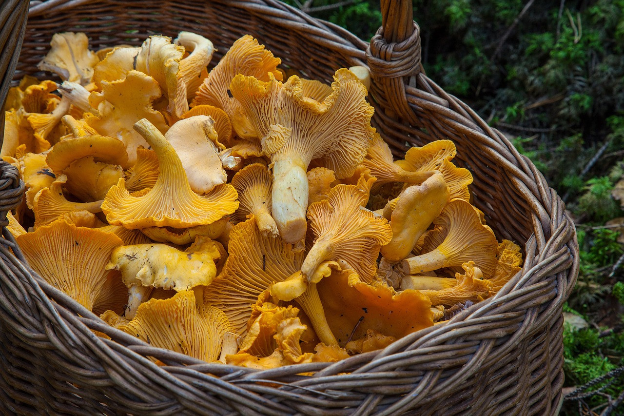 Edible mushrooms guide for home cooks