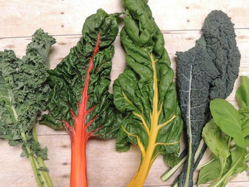 Varieties of kale