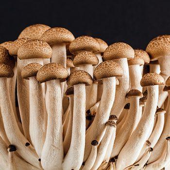 Smushrooms