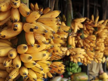 Fresh bananas sold in roadside stall in Tagaytay City, Philippines