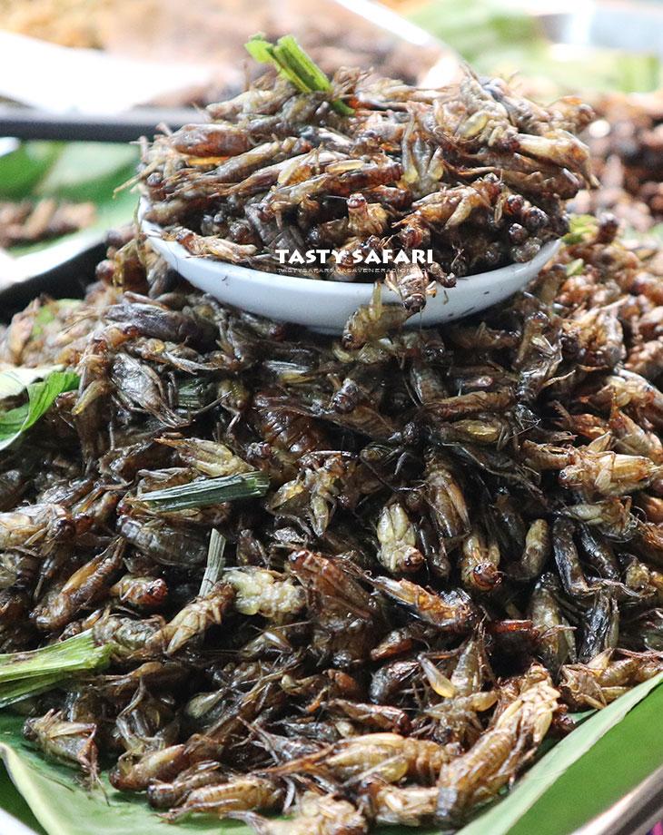 Fried crickets, Chiang Mai