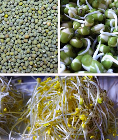 Dried mung beans and sprouts