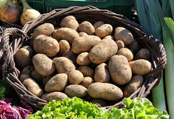 Root Vegetables Grow Underground